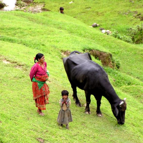 little kid and water buffalo